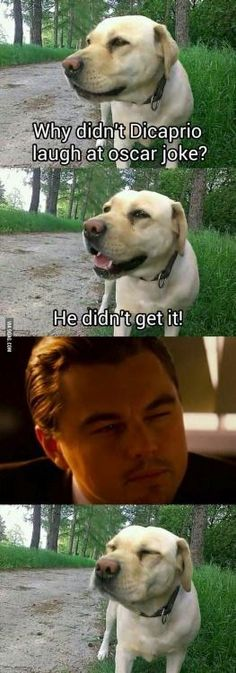 You'll never be able to have a dog stare-off: | 21 Jokes You Can Never Make About Leonardo DiCaprio Again