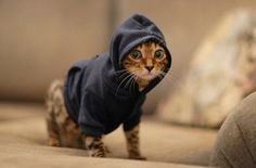 Hoodies for cats. ARE YOU SERIOUS?!?!