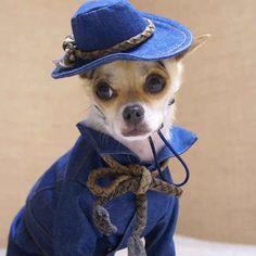 Dainty  the best dressed dog in the universe.  www.pawlidayinnresort.com