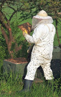 Beekeeping--What to do when you find a queenless hive filled with drones and honey. Missing a queen? This may be the answer you're looking for.