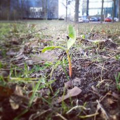 Dag 63; First signs of spring