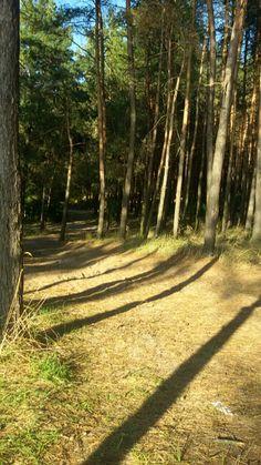 Лес в Украине.