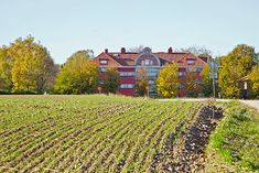 Mellan-Grevie kyrkoväg 3, Mellan Grevie, Vellinge — Bjurfors Vineyard, Outdoor, Outdoors, Vineyard Vines, The Great Outdoors