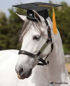 We're proud to announce that SmartGut® Ultra made the grade at LSU! Did you know that an estimated 60-90% of performance horses have ulcers? Luckily, you can help your horse! During a recent study at Louisiana State University, SmartGut Ultra was clinically proven to maintain stomach health in horses under stress. Learn more or add SmartGut Ultra to your horses SmartPaks today! (http://www.smartpakequine.com/smartgut-ultra-pellets--10990p.aspx)