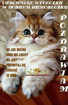 Tiger Love, Morning Quotes, Cats And Kittens, Good Morning, Humor, Happy, Animals, Cos, Wisdom