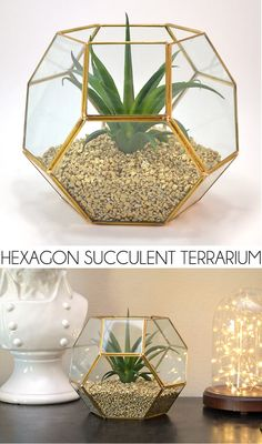 A hexagon succulent terrarium is super on point. See how to make filler that is lightweight enough for the glass but looks like a million bucks!
