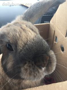Bunny stands up in his carrier - November 29, 2015