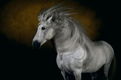 Horse photos that look like paintings by Yann Arthus Bertrand. I own the book (see my library section for more.)