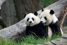 7 Signs This Person Isn't Actually A UX Designer: Not sure what sweet, hot Panda love has to do with UX design? Read on.