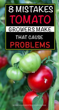 Homegrown tomatoes tastes great, you just can't replace the flavor of fresh tomatoes with store bought varieties. #tomatoplantcare #tomatoplantproblems #tomatogrowingtips