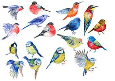 this is a collection of 28 little birds . 5 PNG transparent background .watercolor hand painting.bullfinches,titmouse,swallows,thrush,Oriole, hoopoe, Hummingbird ,hummingbirds and other You can use our graphics for personal or small commercial project Please contact me if you need a commercial license