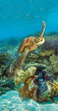 Barrier reef - Green island Amazing Things To Do in Australia Beautiful Sea Creatures, Animals Beautiful, Great Barrier Reef Tours, Great Barrier Reef Snorkeling, Sea Turtle Wallpaper, Sea Turtle Pictures, Cute Turtles, Sea Turtles, Best Island Vacation
