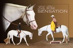 Paint Horse Prospects For Sale - Cheyenne Wyoming - Don Beard Paint Horses