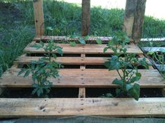 38 Simple and Easy Vegetable Gardening With Pallets #PalletsGardening