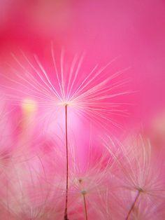 Dandelion fluff Gespot door www.kixx-safety.nl #tuinhandschoenen #garden #gloves