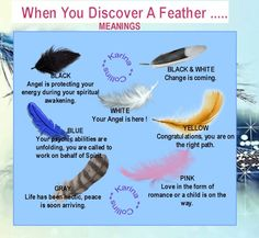 Meanings Of Feathers: Black, White, Pink, Blue Feathers From Your Angel