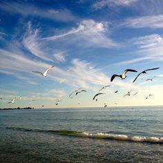 Lido Beach Sarasota, FL