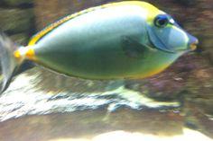 09 Blue Reef Aquarium, Fish, Pets, Animals, Animales, Animaux, Pisces, Animal, Animais