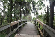 Phinizy Swamp, Augusta