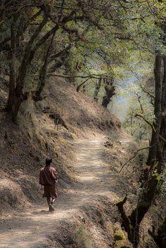 Road to Tango monastery . Bhutan
