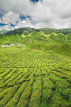 Bharat Teas - Cameron Highlands, Pahang, Malaysia