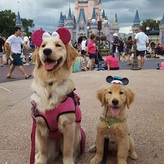 The Happiest Place on Earth: 9 Service Dogs At Disney World
