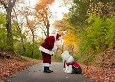 Santa and Old English Sheepdog