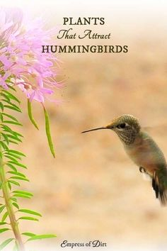 Love hummingbirds? There are many different flowering plants you can add to your garden or balcony to attract and nourish these beautiful birds. Have a look at the suggestions and see what would work in your yard. Hummingbirds, like bees and butterflies,