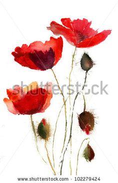 Red poppy flowers - stock photo