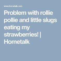 Problem with rollie pollie and little slugs eating my strawberries! | Hometalk