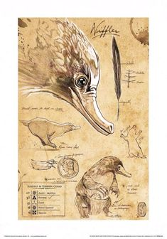 """Nyhler from """"Fantastic creatures and their places about . - Nyhler from """"Fantastic creatures and their habitats"""" - Phoenix Harry Potter, Art Harry Potter, The Beast, Fuchs Illustration, Spiderwick, Beast Creature, Desenhos Harry Potter, Fantastic Beasts And Where, Mythological Creatures"""