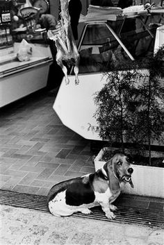 "View ""Saint Tropez by Elliott Erwitt on artnet. Browse upcoming and past auction lots by Elliott Erwitt. Eliot Erwitt, Happy Lunar New Year, New Year 2018, Documentary Photographers, Dog Years, Saint Tropez, Dog Photos, Vintage Cards, Paris France"