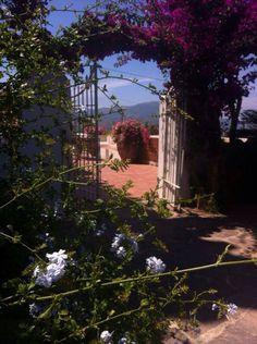 Plumbago, bugavillea and geranius at Villa Rica ( Sicily)