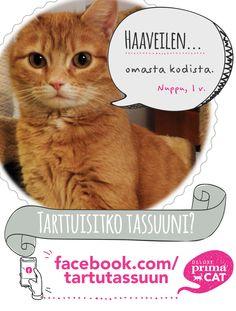 Koditon kissa Nuppu toivoo erityisesti kissakaveria seuraksi.