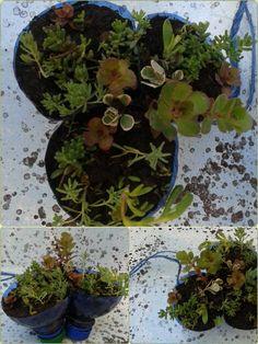 Riciclo Bottigliette di plastica per creare mini vasetti per piantine semi grasse da appendere