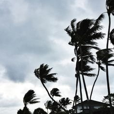 tropical storm Photo by @happymundane on Instagram #hawaii