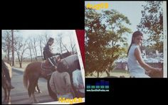 Rising Sun and other Horses at Graceland