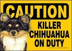 be waer of chihuahua | Caution Killer Chihuahua multi-color