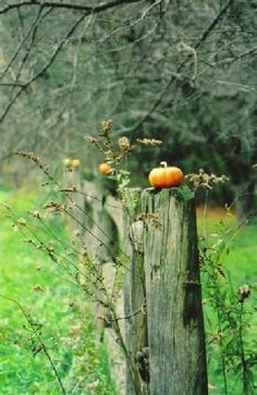 All in a Row, Pumpkins on a Fence, Westfield, Massachusetts