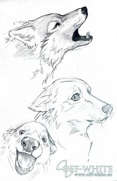(pas de titre) The Effective Pictures We Offer You About anime dessin tuto A quality p Animal Sketches, Animal Drawings, Cool Drawings, Drawing Sketches, Wolf Sketch, Furry Drawing, Painting & Drawing, Drawing Drawing, Furry Art