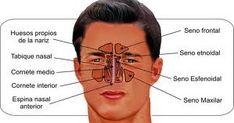 Hasta que el aire pasa por las cuerdas vocales todos los seres humanos compartimos una misma anatomía que permite explicar la técnica de respiración a todos de una manera sencilla.  Las cuerdas (su tamaño grosor etc) determinan cómo se va a producir el sonido básico pero son las cavidades de resonancia las que van a caracterizar una voz.  El control de la columna del aire hará que ese sonido se vaya asentando progresivamente y la voz se vaya desarrollando de una manera flexible y coherente…