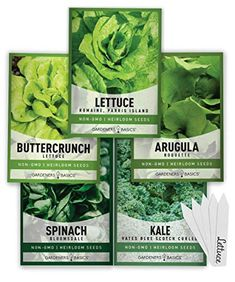 How Long Does It Take To Grow Spinach? 3 Planting Spinach, Growing Spinach, Kale And Spinach, Buttercrunch Lettuce, Lettuce Seeds, Head Of Lettuce, Compost Tea, Hydroponic Growing, Kale