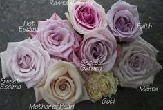 Blush Rose Color Study by Flirty Fleurs, Roses provided by Harvest Wholesale. http://www.harvestwholesale.com Roses include Faith, Secret Garden, Rosita Vendela, Hot Escimo, Menta, Mother of Pearl, Gobi and Sweet Escimo