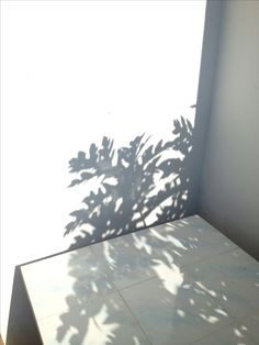 Tree shadow photography life Ideas for 2019 Tree shadow photography life Ideas for 2019 Shadow Photography, Life Photography, Shadow Play, Shadow Tree, Sun Shadow, Gray Aesthetic, Aarhus, Chiaroscuro, Light And Shadow