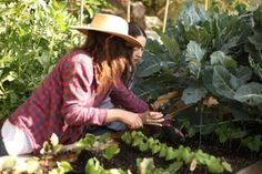 Planting beans with Jenni Kayne in her front yard vegetable garden.