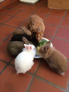 Samen eten in de keuken
