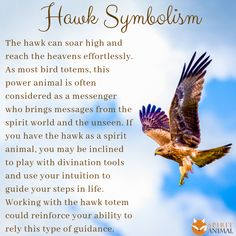 Hawk Spirit Animal, Hawk Meaning A selection of bird photos Hawk Spirit Animal, Spirit Animal Totem, Animal Spirit Guides, Your Spirit Animal, Animal Totems, Native American Spirituality, Native American Wisdom, American History, American Women