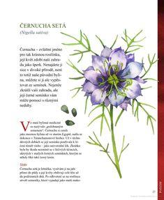 Bylinková terapie: Léčivé elixíry pro zdraví i krásu - Golasovská Monika - Knihy Google