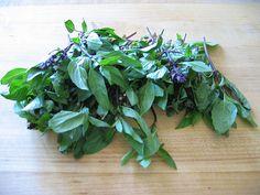 A bazsalikom (Ocimum basilicum) az árvacsalánfélék (Lamiaceae) családjába tartozik. Ebbő a részből megtudhatjuk, hogy mennyi tápérték van pontosan 100 g bazsalikomban és, hogy hogyan fogyasszuk. Parsley, Herbs, Plants, Herb, Flora, Plant, Planting