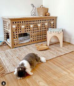 Rabbit Treats, Rabbit Food, Pet Rabbit, Diy Bunny Cage, Bunny Cages, Bunny Room, Indoor Rabbit, Pet Bunny Rabbits, Bunny Bunny